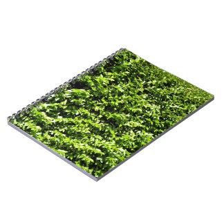 Textura fresca de las hojas del verde cuaderno