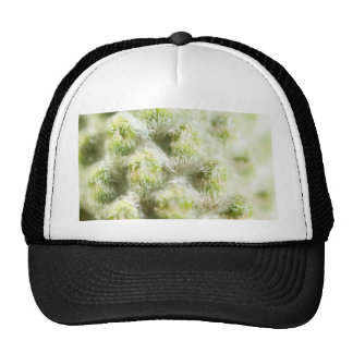 textura gorra
