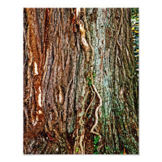 Textura hermosa de la corteza de árbol cojinete