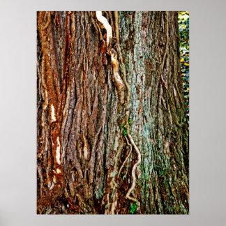 Textura hermosa de la corteza de árbol póster