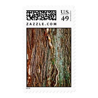 Textura hermosa de la corteza de árbol sello