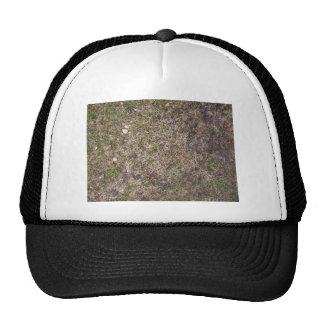 Textura sucia de la hierba seca de Brown Gorras De Camionero