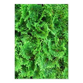 """Textura única de los árboles de hoja perenne de la invitación 5"""" x 7"""""""