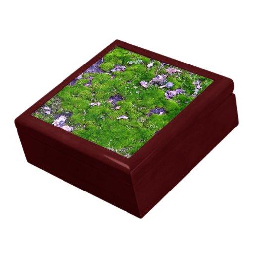 Textura verde clara del musgo caja de joyas