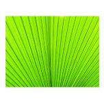 Textura verde de la hoja de la palmera. Fondo de l Postales