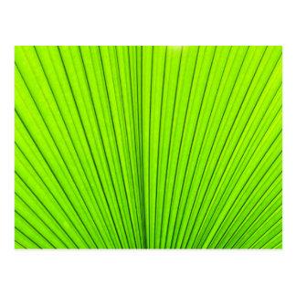 Textura verde de la hoja de la palmera. Fondo de Tarjeta Postal