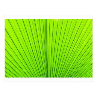 Textura verde de la hoja de la palmera. Fondo de Tarjetas Postales