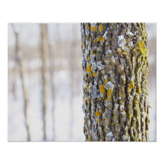Texture and pattern of lichens on tree poster
