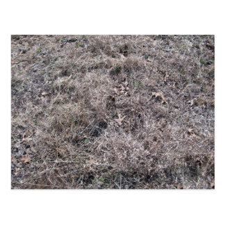 Texture of Dry Grass and Leaves Postcard