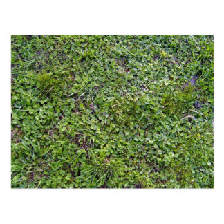 Texture of Grass and Small Plants Postcard