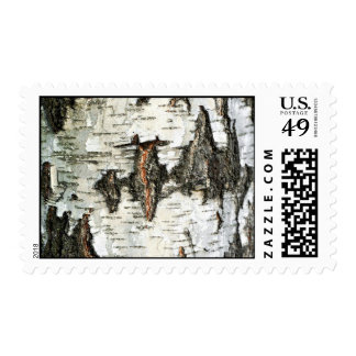 Texture postage stamp with cracked birch bark