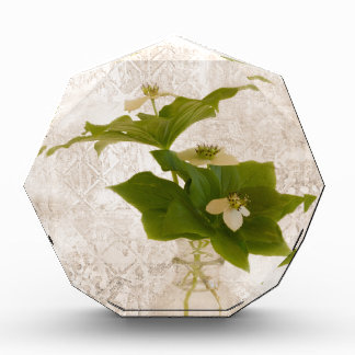 Textured Dogwood Bunch Berry In Jar Still Life Award