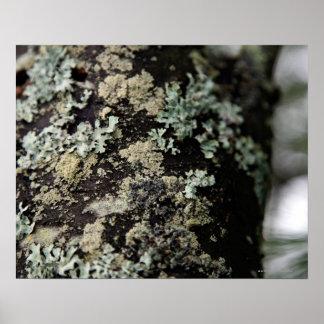 Texturice y modelo de liquenes en tronco de árbol póster
