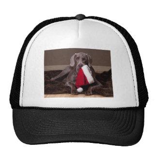 Teyla el gorra de Weimaraner y de Santa