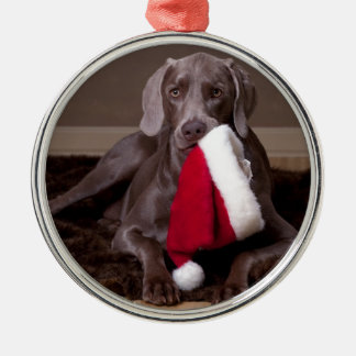 Teyla the Weimaraner and Santa Hat Christmas Ornament
