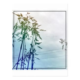 Tezcapalotl Photography Postcard