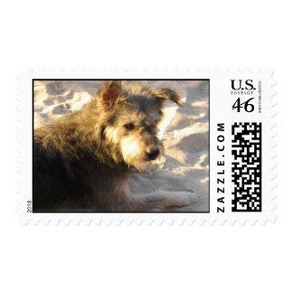 Thai Beach Dog Postage Stamp