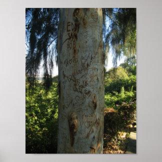 Thai Tree Graffiti Poster