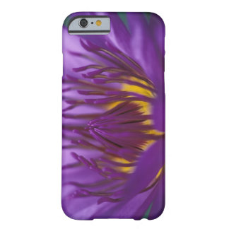 Thailand, Bangkok, Purple and yellow lotus 2 Barely There iPhone 6 Case