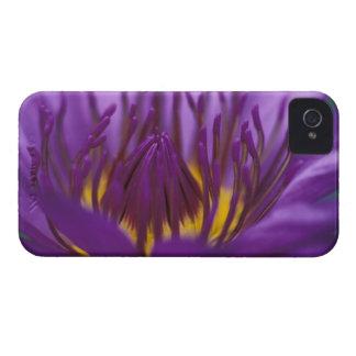 Thailand, Bangkok, Purple and yellow lotus 2 iPhone 4 Case