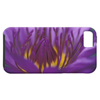 Thailand, Bangkok, Purple and yellow lotus 2 iPhone SE/5/5s Case