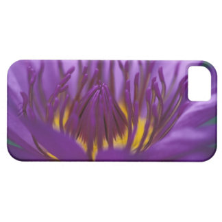 Thailand, Bangkok, Purple and yellow lotus 2 iPhone SE/5/5s Case
