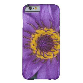 Thailand, Bangkok, Purple and yellow lotus Barely There iPhone 6 Case