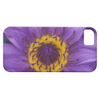 Thailand, Bangkok, Purple and yellow lotus iPhone SE/5/5s Case
