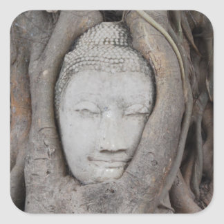 Thailand Head of Buddha surrounded by trees Square Sticker