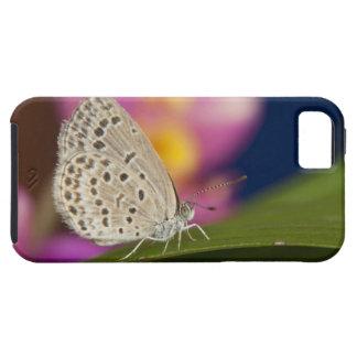 Thailand, Khon Kaen, The pale grass blue iPhone SE/5/5s Case