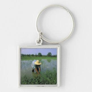 Thailand, Sukhothai. Rice farmer. MR. Keychain