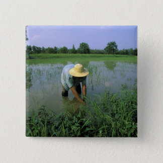 Thailand, Sukhothai. Rice farmer. MR. Pinback Button