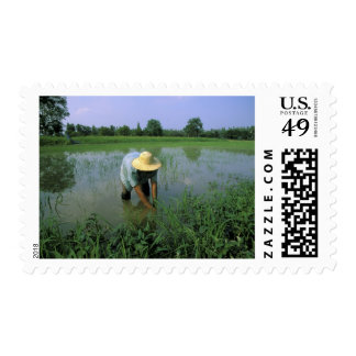 Thailand, Sukhothai. Rice farmer. MR. Postage