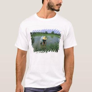 Thailand, Sukhothai. Rice farmer. MR. T-Shirt