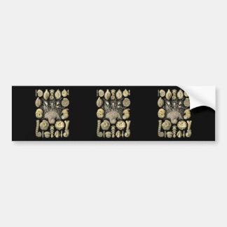 Thalamophora Bumper Sticker