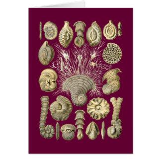 Thalamophora Card