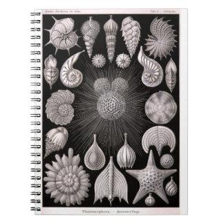 THALAMOPHORA Kammerlinge Protozoa Notebook