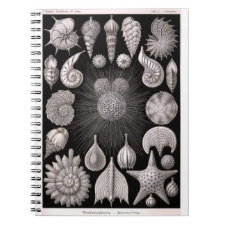 THALAMOPHORA Kammerlinge Protozoa Spiral Notebook