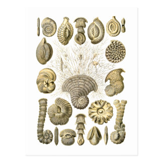 Thalamophora Postcard