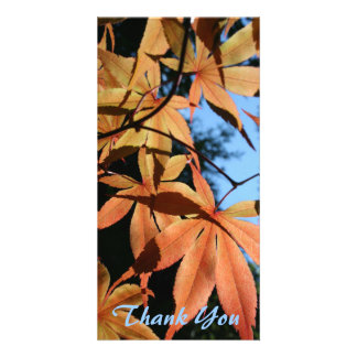 Thank You (3) - Japanese maple (2) - Photo Card