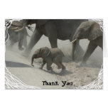Thank You -   African Elephant Greeting Card