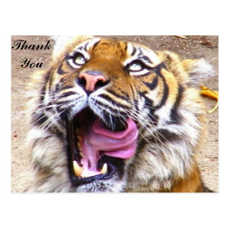 Thank You/Any Occasion_Postcard Postcard