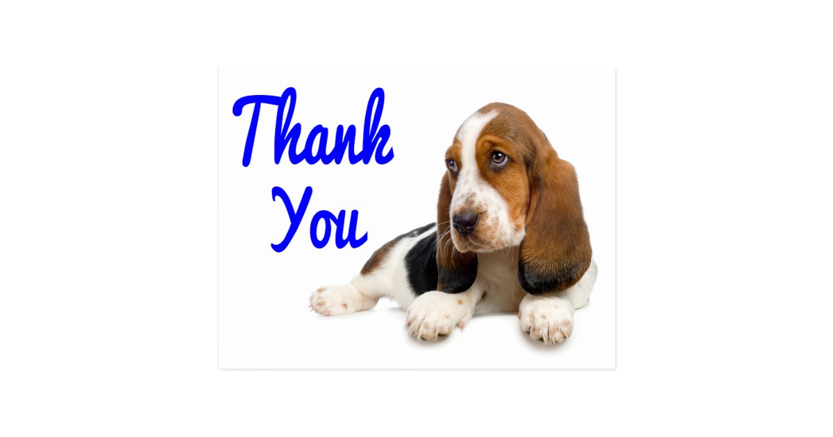 Thank You Basset Hound Greeting Post Card | Zazzle.com