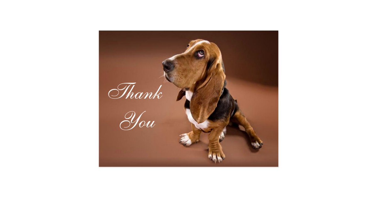 Thank You Basset Hound Greeting Post Card | Zazzle.com
