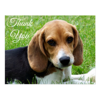 Thank You Beagle Puppy Dog Greeting Post Card