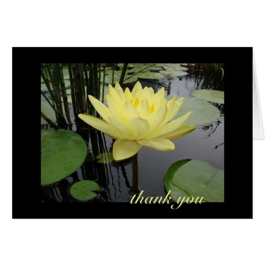 Thank You - Beautiful Water Lily Card