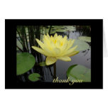 Thank You - Beautiful Water Lily Greeting Card