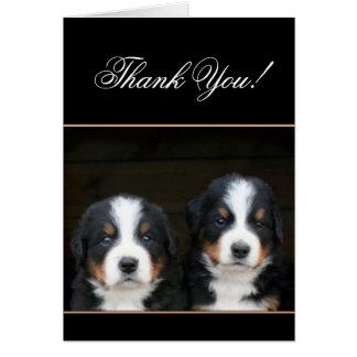 Thank You Bernese mountain dog pups card