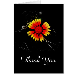 Thank You/ Blank Card