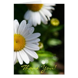 Thank You Blank, Daisy Card
